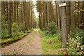 NZ0058 : Road into Acorn Hill Plantation by Trevor Littlewood