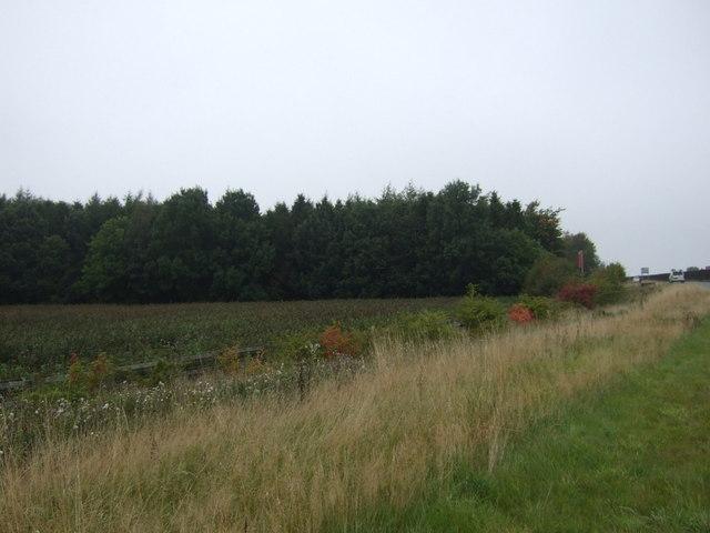 Metalbridge Wood