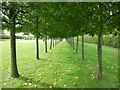 TF7828 : Avenue of Pleached Limes at Houghton Hall by Sandra Humphrey