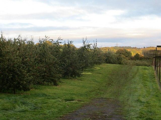 Orchard and hopyard, Lindridge