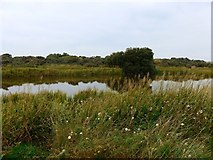 NT4681 : Marl Loch by Gordon Brown
