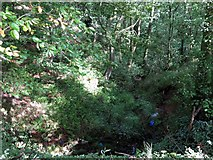NY6565 : Woodland beside Greenhead Cleugh by Andrew Curtis