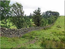 NY6565 : Pennine Way west of Haltwhistle Golf Course by Andrew Curtis
