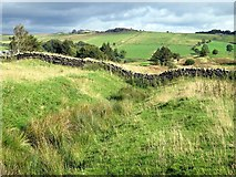 NY6565 : Vallum at Haltwhistle Golf Course by Andrew Curtis