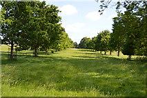 TQ5244 : Avenue of Oaks, Penshurst Park by N Chadwick