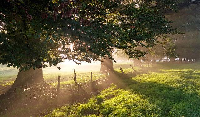Misty morning, Upton Grey