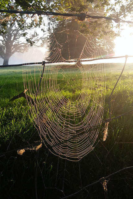 Cobweb on the Hoddington Estate