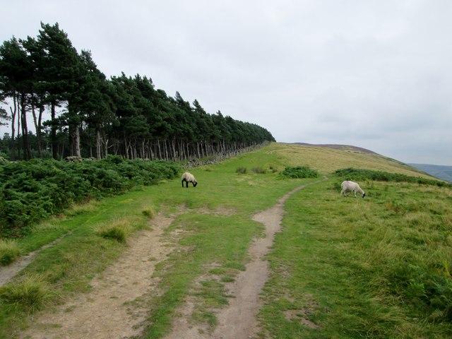 Along  the  ridge  top  toward  Win  Hill