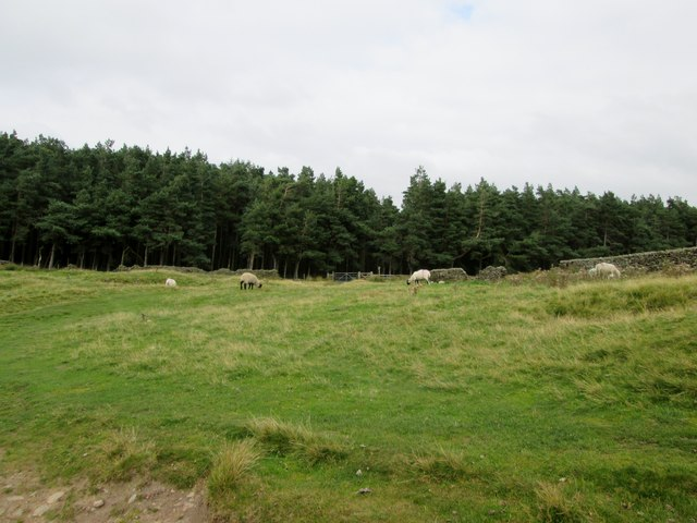 Footpath  to  Ladybower  Reservoir  enters  forestry