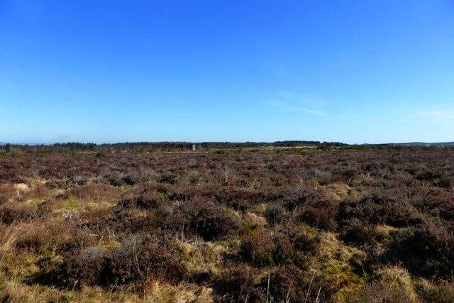 Culloden Battlefield [8]