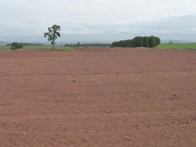 Large bare field, north of Limekiln Plantation [2]