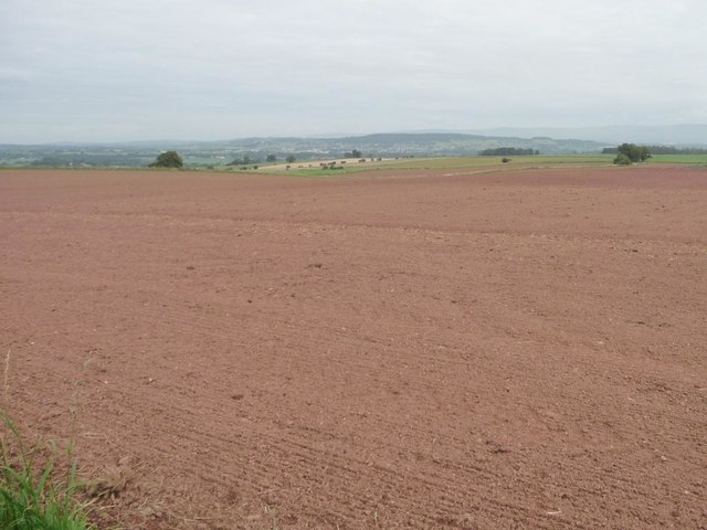 Large bare field, north of Limekiln Plantation [3]