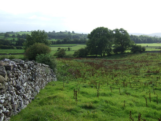 Rough grazing and stone wall