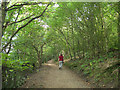 SE2634 : Path through the woods, Pasture Hills by Stephen Craven