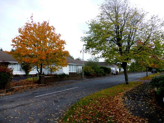 Autumnal scene, Omagh