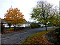 H4772 : Autumnal scene, Omagh by Kenneth  Allen