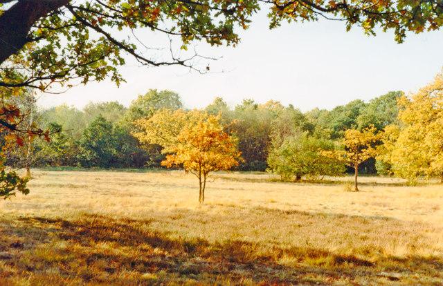 Autumn colours on Wimbledon Common
