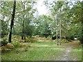 SU2916 : Half Moon Common, open woodland by Mike Faherty