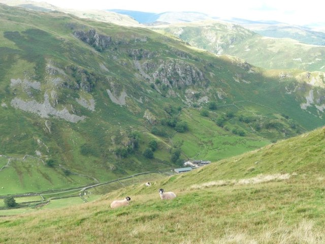 Sheep below Brownthwaite Crag, Martindale