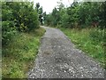 SJ8147 : Silverdale Country Park: newly laid path by Jonathan Hutchins