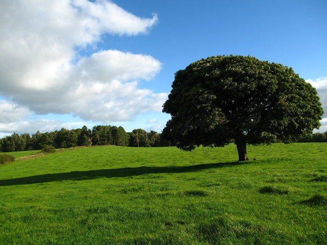 Large field west of Ram Wood