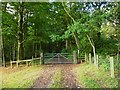 SJ2366 : Footpath along track into Big Wood by Maggie Cox