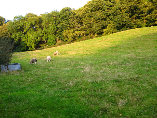 Grazing field and woodland