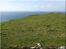 SW6614 : Grass and rocks on Vellan Head by David Smith
