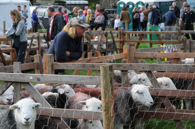 Sheep at the Wasdale Head Show
