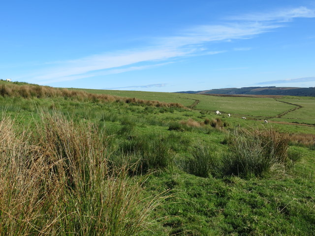 Rough grazing land for sheep above High Cattadale Farm