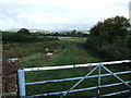 NY5440 : Field path off Fiddler's Lane, Lazonby by David Brown