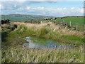 SE0711 : Krives lane, Lingards by Humphrey Bolton