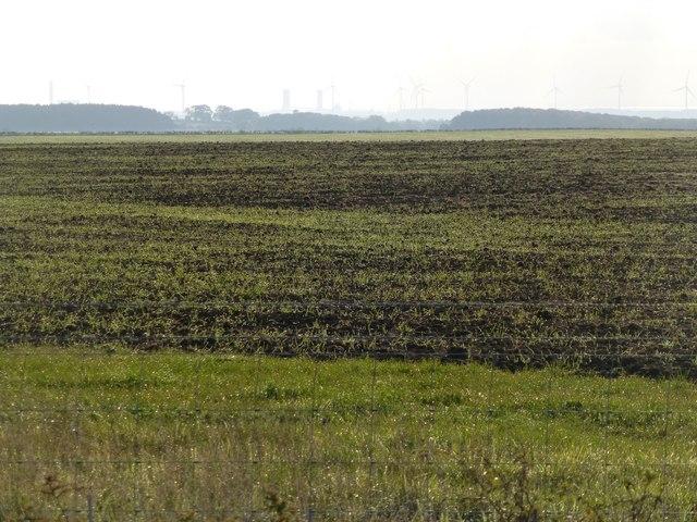 Restored farmland