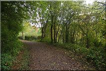 SJ6903 : Branch to Coalport by Stephen McKay