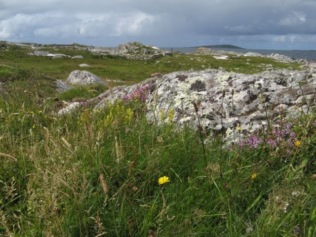 Rock outcrops and wild flowers