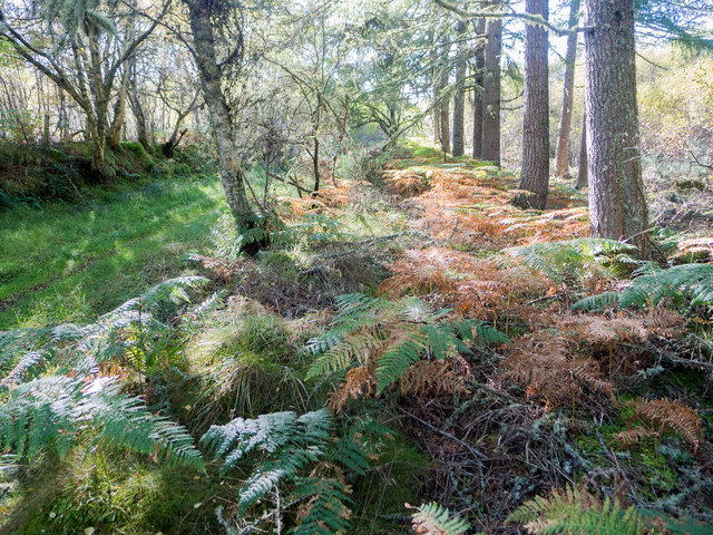 Minor forestry track from Agnes Hill into the Millbuie Forest