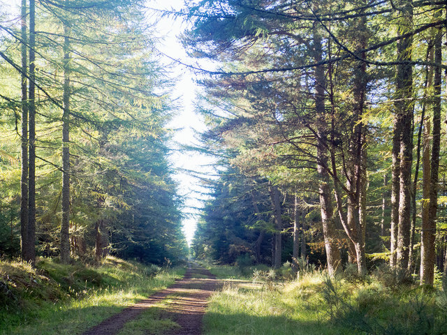 Forestry road through the Millbuie Forest