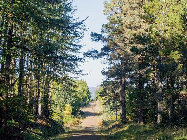 Millbuie Forestry Road heading to Brae Farm
