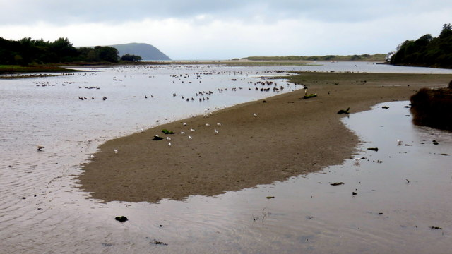 Birds and sandbank on the Nyfer estuary