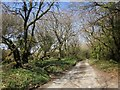 SX2576 : Lane to Berriowbridge by Derek Harper