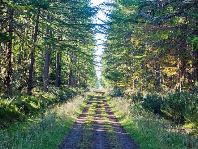 Well maintained forestry road through the Millbuie Forest