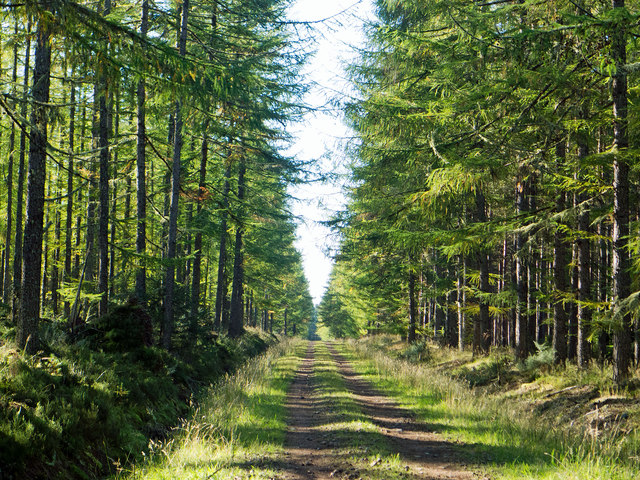 A straight forestry road across the Millbuie Forest