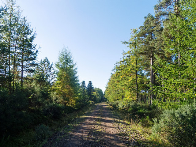 Minor forestry road across the Millbuie Forest