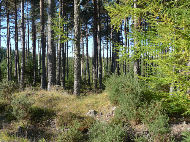 By a boundary in the Millbuie Forest