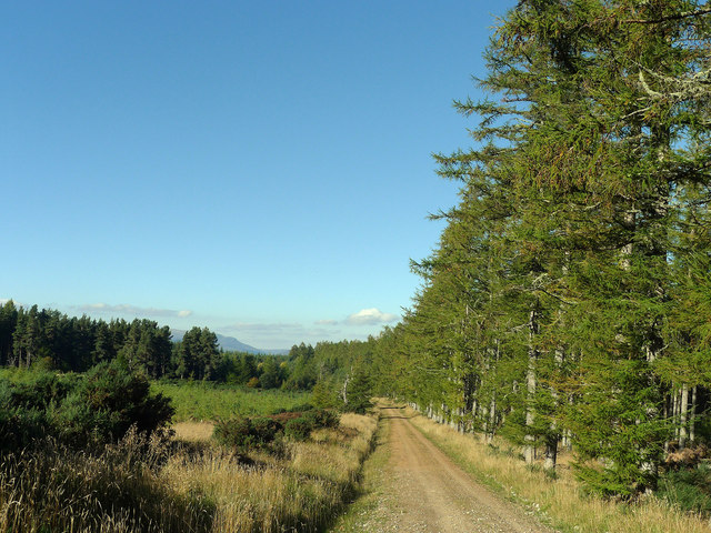 Forestry track beside a cleared section of the Millbuie Forest
