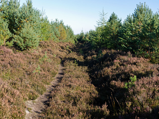 Minor track through the Millbuie Forest