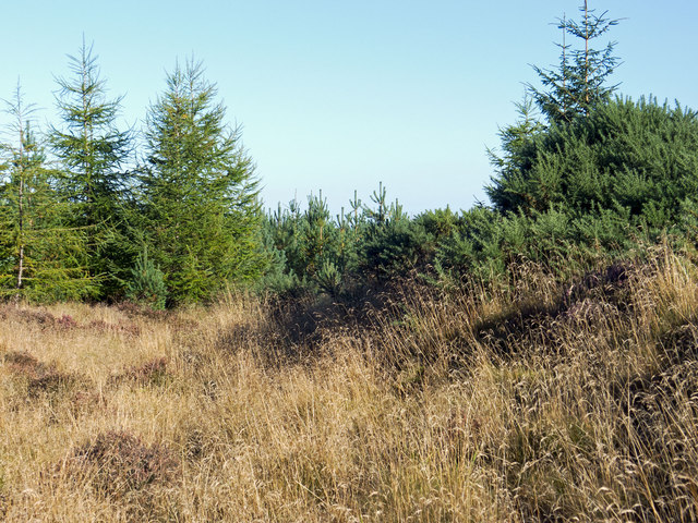 Axis of Wester Brae Long Cairn