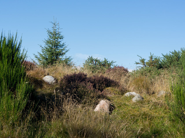 Side of Wester Brae Long Cairn