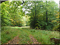SP8301 : Track into Keepershill Wood by Robin Webster