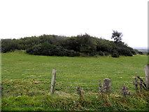 H5672 : Rath, Mullagslin Glebe by Kenneth  Allen